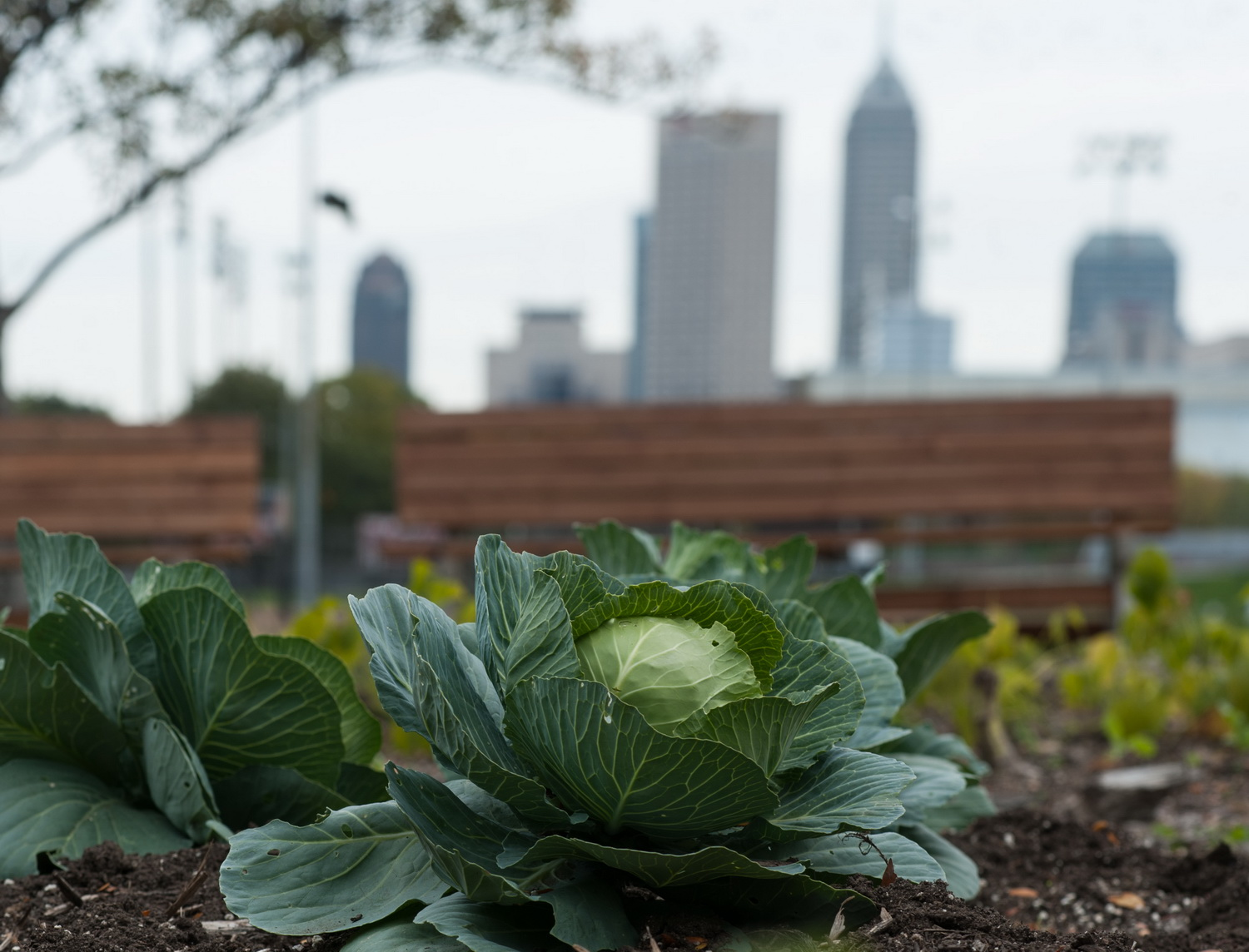 Urban agriculture: Not just for hipsters