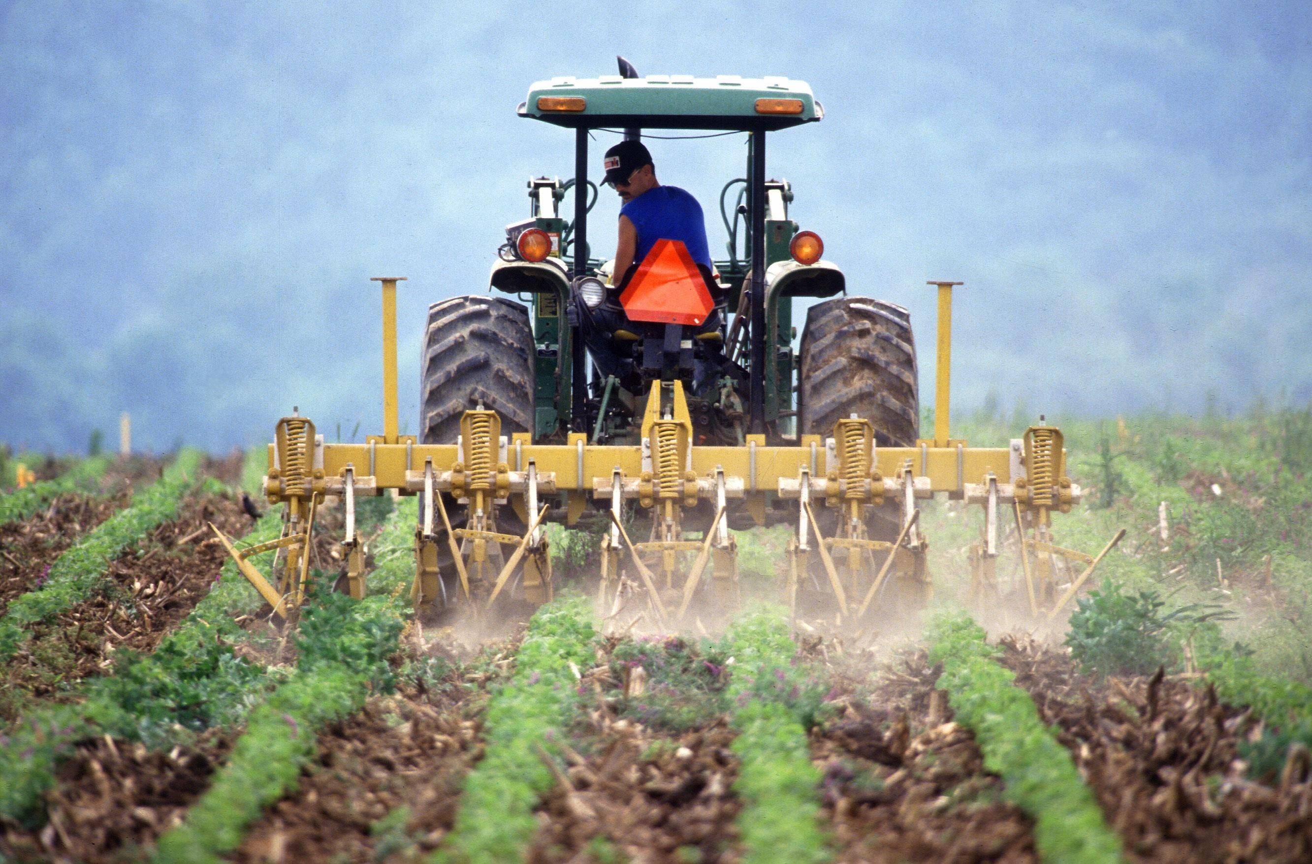 GMOs and Organic Farming: Can they be friends?
