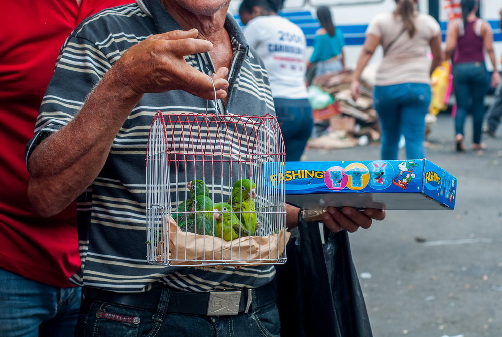 The Rio Olympics: Green or a Greenwash?