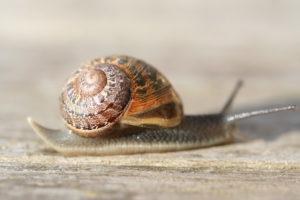 Snail_(xndr)