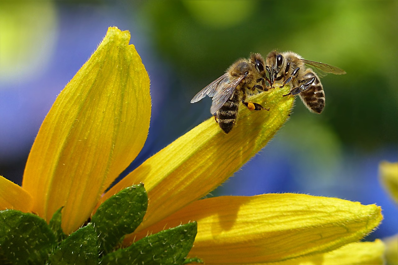 Let the next round for the lives of the bees begin