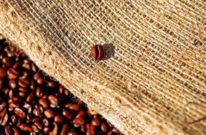 coffee-1576259_1280
