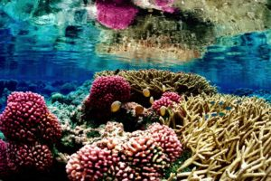 coral-reef_flickr