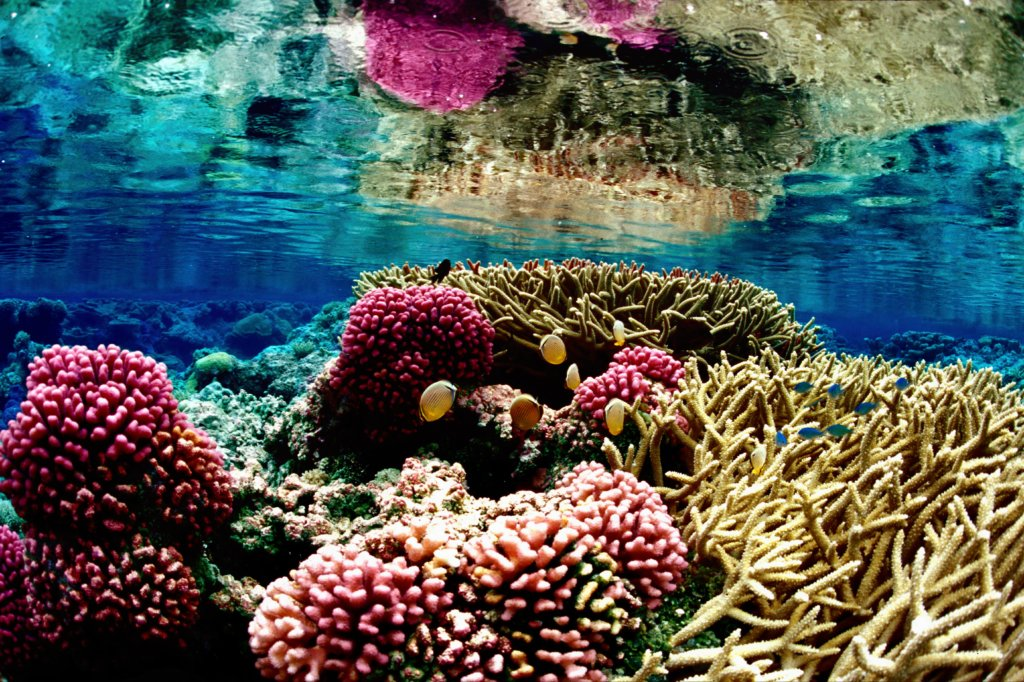 Coral Conundrum: the ignored victim of the South China Sea