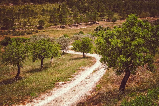 The Italian olive trees syndrome: facts, opinions and responsibilities